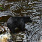 eagles-wings-wilderness-lodge-southeast-alaska-07