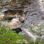 eagles-wings-wilderness-lodge-southeast-alaska-17